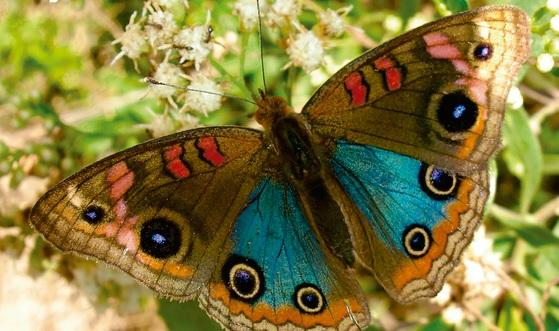 """Presentaron el libro """"Mariposas porteñas"""" en el Parque de la Estación"""